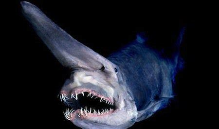 15 Creatures That Look Like They Are From Another Planet