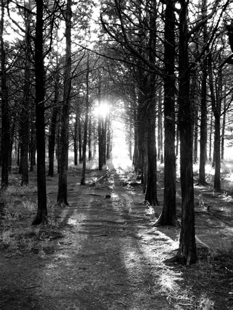 The Haunted Parallel Forest Is Not For The Faint Of Heart