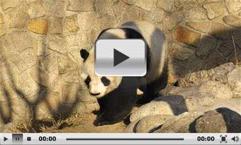 Beijing Zoo: Panda House, Prices and Map
