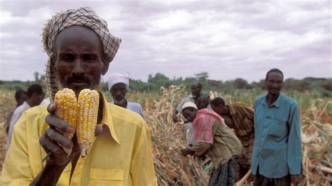 Call for Action on African Food Security - Our World